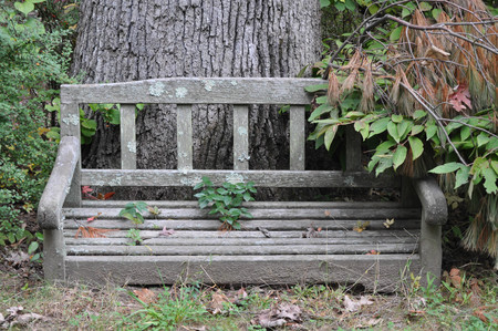 Overgrown Wood Sitting Bench by a Tree Stock Photo