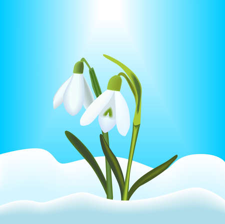 Snowdrops Illustration