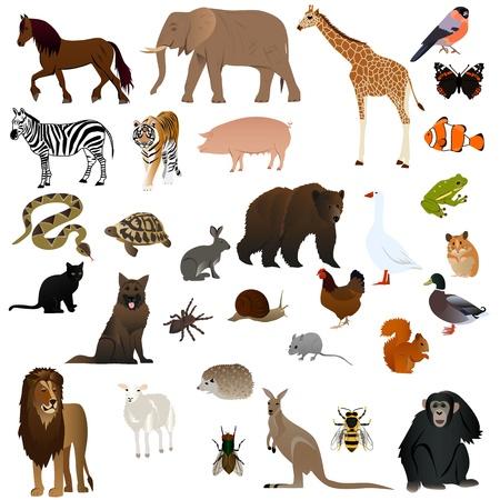 Animals set 1 Ilustrace