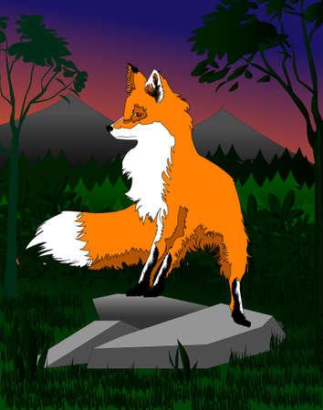 A fox Фото со стока - 71970233