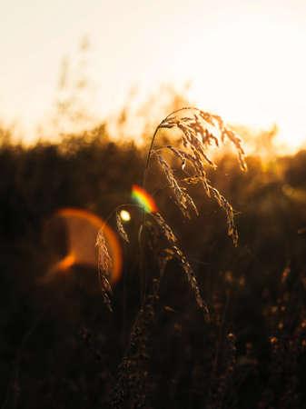 Golden hour and hay grass Stock fotó