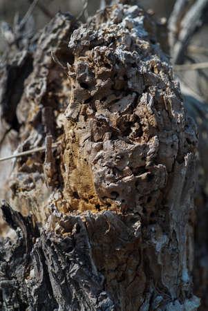 Tree stump bark texture