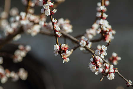 Spring tree flowers blossom