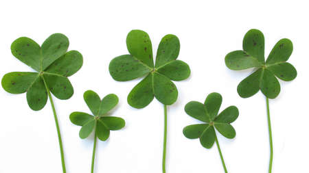 Isolated image of five clovers.