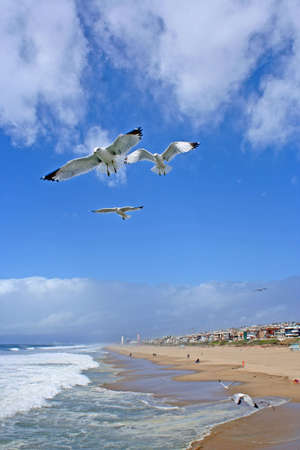 Seagulls Flying Over The Seashore  photo