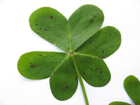 one clover Stock Photo - 2845761