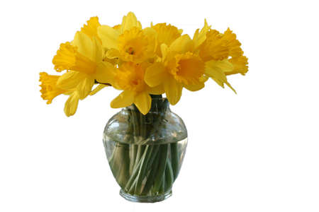 Daffodils in Vase Stock Photo