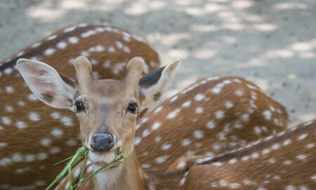 Deer in the zoo photo