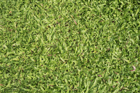 Green grass background abstract natural Stock Photo