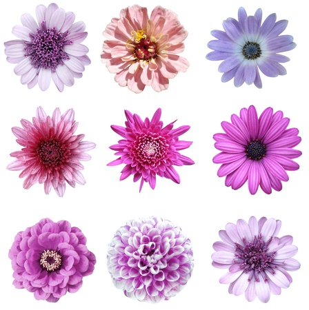 collage violet flowers photo