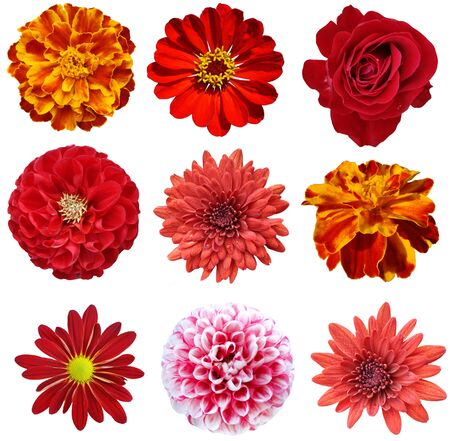 collage of isolated red flowers  photo
