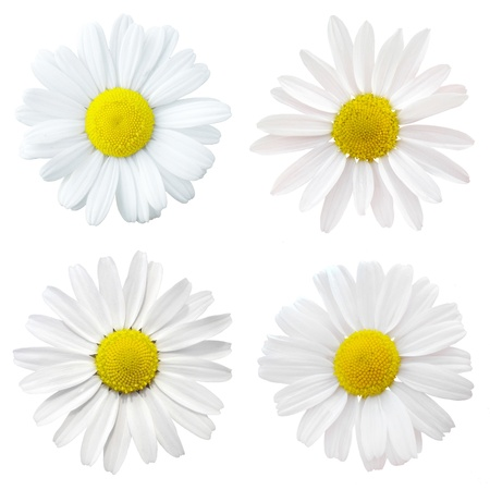 collage white flowers
