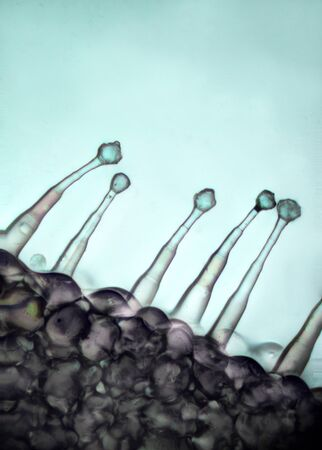 micro: Micro hair plant, under microscope