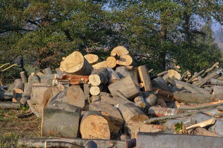 A pile of logs cut down and ready to be processed or used as firewood, timber log from coniferous wood sawed and left outdoors in the forest