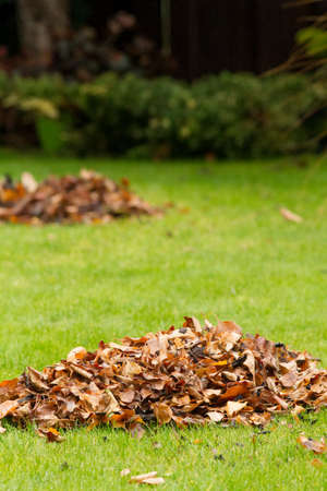 Autumn leaves fallen on green grass field