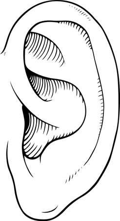 ohr: Menschliche Ohr Illustration