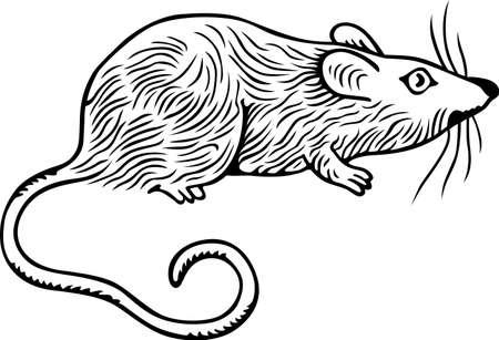 rata caricatura: Gran rata gris sobre fondo blanco Vectores