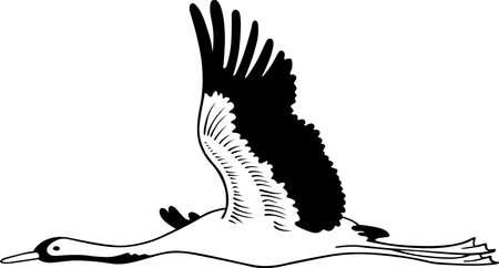 Stork flying on white background  Vector