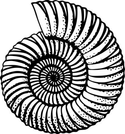 petoncle: Seashell isol� sur blanc