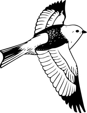 ornithology: Bird flying