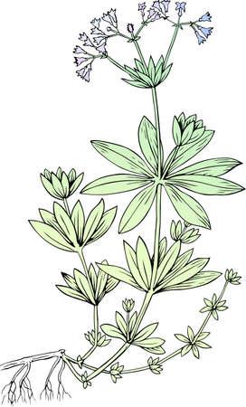 Flower on white Stock Vector - 10315306
