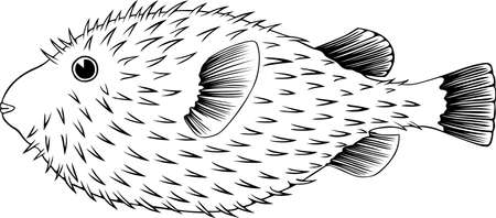 Fish on white Vector