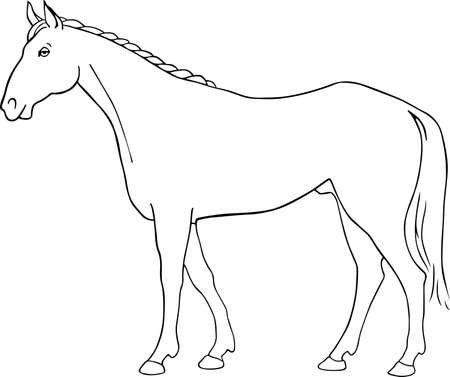 Horse isolated on white  Vector
