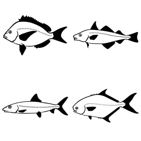 fish silhouette: Fish on white