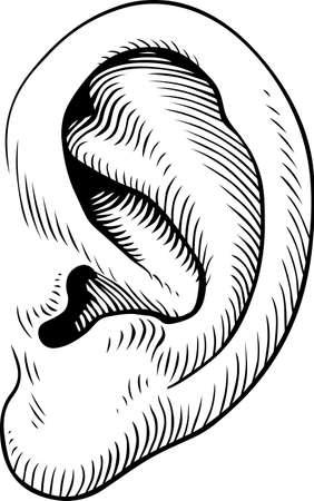 body jewelry: Human ear