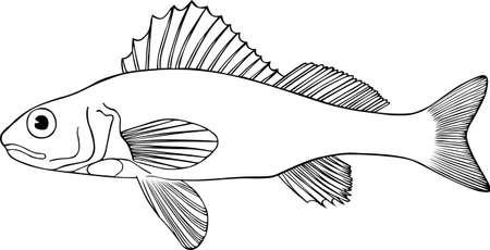 ichthyology:  Big fish on white