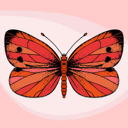 rosy: Red butterfly on rosy  background