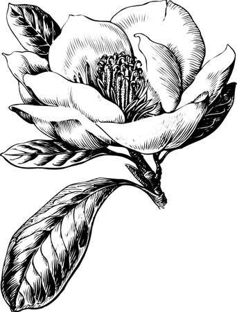 Flower on white Stock Vector - 10333210