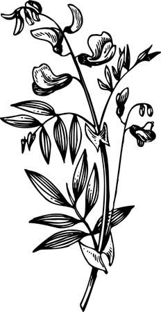 herbarium: Plant on white