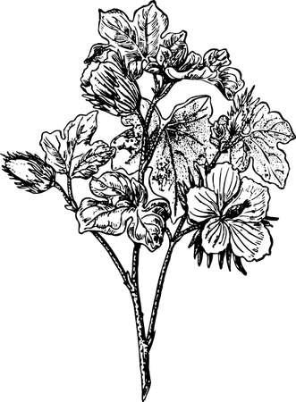 Plant op wit
