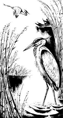 fisher: Crane on the lake