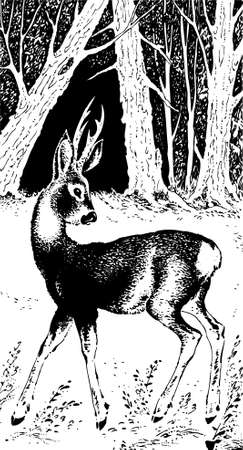 wildlife: Deer in the forest Illustration
