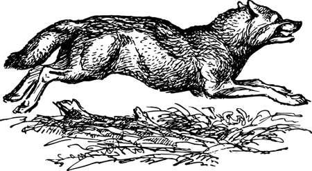 Funcionamiento del perro: Lobo corriendo