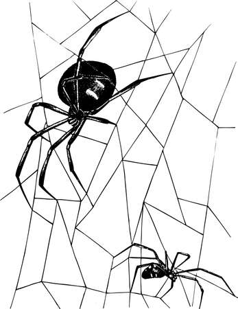 crawly: Spiders on white Illustration
