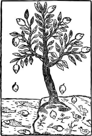 lemon tree: Lemon tree by the sea Illustration