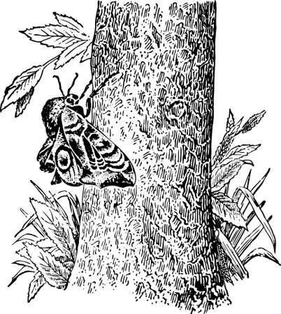 lepidoptera: Butterfly on the tree Illustration