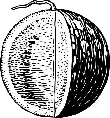 Watermelon Stock Vector - 10361565