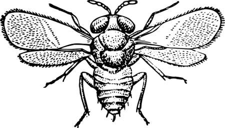musca: Fly