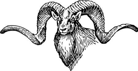 wild web: Goat