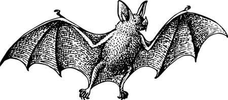 murcielago: Bat volando