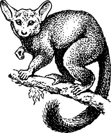 Lemur on the branch Stock Vector - 10373960