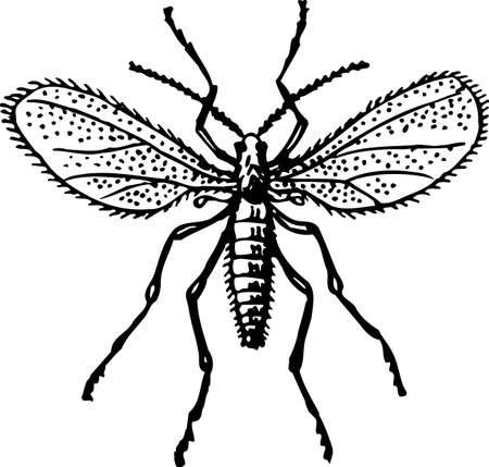 bothersome: Mosquito