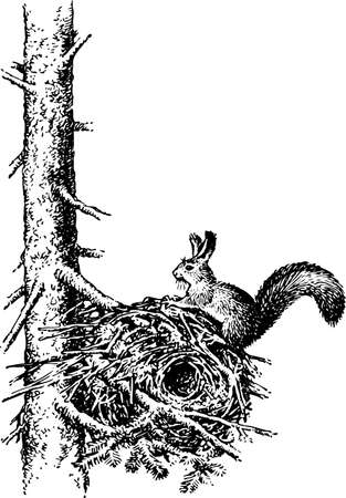 fur trees: Squirrel on the tree Illustration