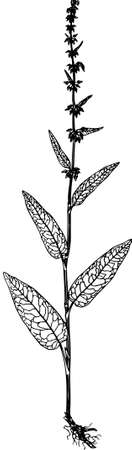 black branch: Plant on white