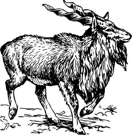 Goat Stock Vector - 10382851