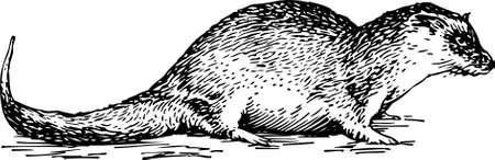 roedor: Roedor Vectores